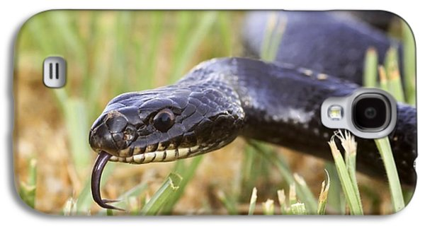 Wild Racers Galaxy S4 Cases - Large Whipsnake (coluber Jugularis) Galaxy S4 Case by Photostock-israel