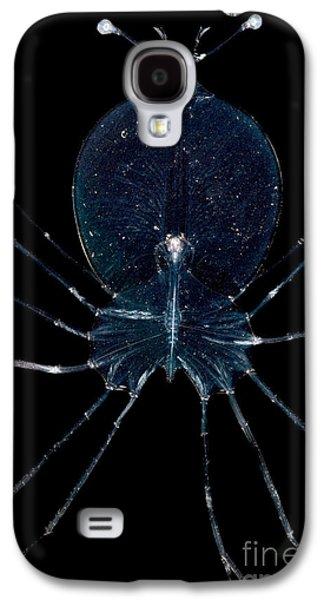 Plankton Galaxy S4 Cases - Larval Lobster Galaxy S4 Case by Danté Fenolio