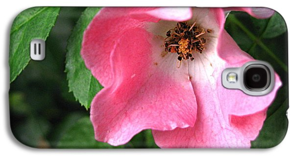 Original Art Photographs Galaxy S4 Cases - Last Bloom Galaxy S4 Case by Colleen Kammerer