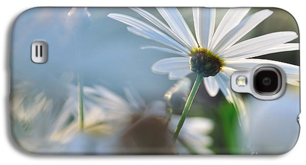 Sunlight On Flowers Galaxy S4 Cases - Late Sunshine on Daisies Galaxy S4 Case by Kaye Menner