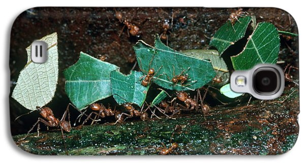 Leafcutter Ants Galaxy S4 Case by Gregory G. Dimijian