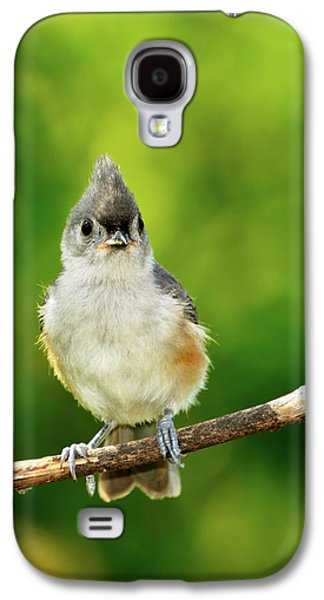Tufted Titmouse Galaxy S4 Cases - Liking My Style Galaxy S4 Case by Betty LaRue
