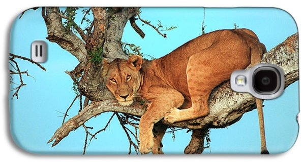 Vacation Galaxy S4 Cases - Lioness in Africa Galaxy S4 Case by Sebastian Musial