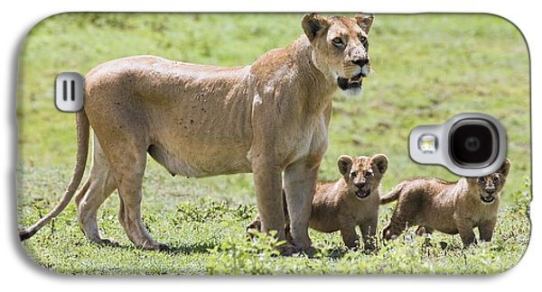African Heritage Galaxy S4 Cases - Lioness With Cubs Galaxy S4 Case by Carson Ganci