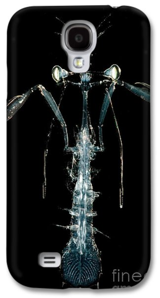 Plankton Galaxy S4 Cases - Lobster Larva Galaxy S4 Case by Danté Fenolio