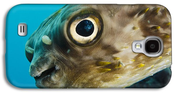 Porcupine Fish Galaxy S4 Cases - Long-spine Porcupinefish Diodon Galaxy S4 Case by Pete Oxford