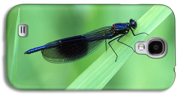 Demoiselles Galaxy S4 Cases - Male Banded Damselfly Galaxy S4 Case by Dr Keith Wheeler