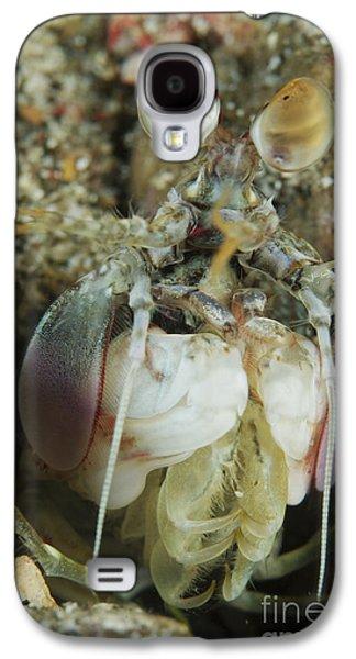 Emergence Galaxy S4 Cases - Mantis Shrimp Sticking Head Galaxy S4 Case by Mathieu Meur