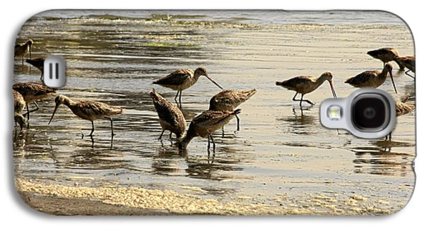 Seabirds Galaxy S4 Cases - Marbled Godwit birds at Sunset Galaxy S4 Case by Christine Till