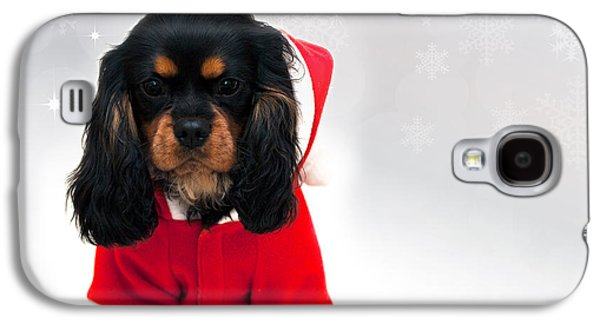 Studio Photographs Galaxy S4 Cases - Marmaduke with snowflake background Galaxy S4 Case by Jane Rix