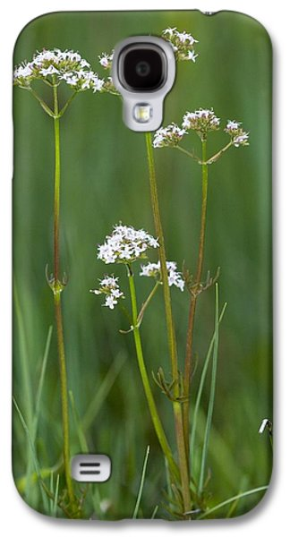 Fens Galaxy S4 Cases - Marsh Valerian (valeriana Dioica) Galaxy S4 Case by Bob Gibbons