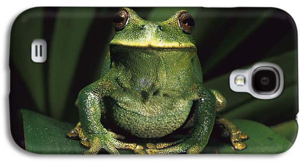 Frogs Photographs Galaxy S4 Cases - Marsupial Frog Gastrotheca Orophylax Galaxy S4 Case by Pete Oxford