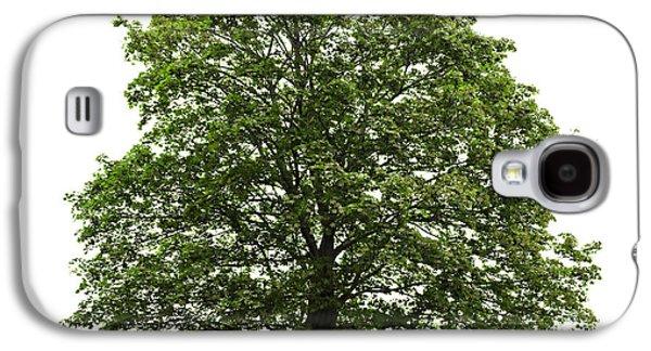 Green Galaxy S4 Cases - Mature maple tree Galaxy S4 Case by Elena Elisseeva