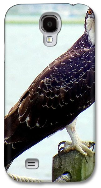 My Ocean Galaxy S4 Cases - My Feathered Friend Galaxy S4 Case by Karen Wiles