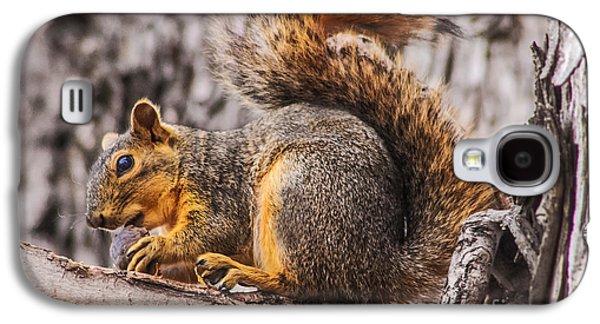 Fox Squirrel Galaxy S4 Cases - My Nut Galaxy S4 Case by Robert Bales
