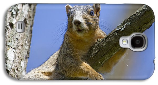 Fox Squirrel Galaxy S4 Cases - Natural Blues Galaxy S4 Case by Betsy A  Cutler
