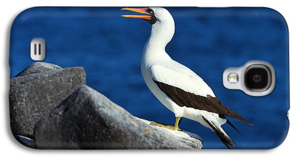 Nazca Booby Galaxy S4 Case by Tony Beck