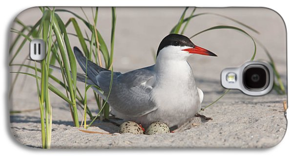 Hirundo Galaxy S4 Cases - Nesting Common Tern Galaxy S4 Case by Clarence Holmes