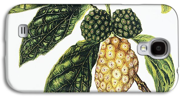 Fruit Tree Art Galaxy S4 Cases - Noni Fruit Galaxy S4 Case by Hawaiian Legacy Archive - Printscapes