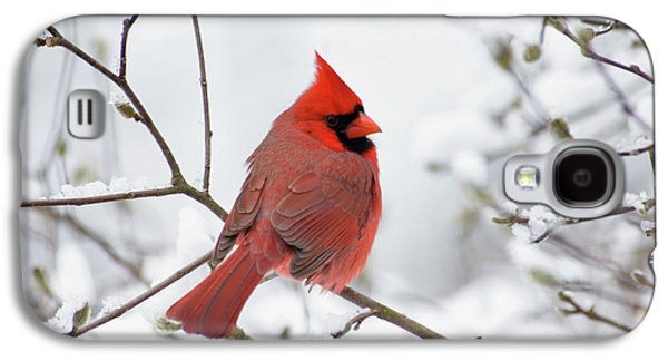 Indiana Winters Galaxy S4 Cases - Northern Cardinal - D001540 Galaxy S4 Case by Daniel Dempster