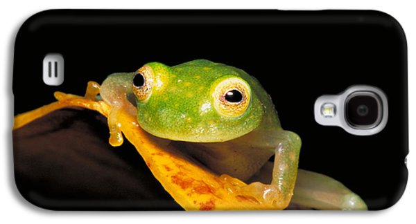 Anurans Galaxy S4 Cases - Northern Glass Frog Galaxy S4 Case by Dante Fenolio