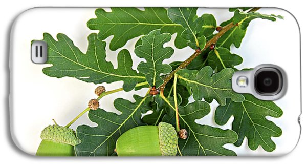 Botanical Galaxy S4 Cases - Oak branch with acorns Galaxy S4 Case by Elena Elisseeva