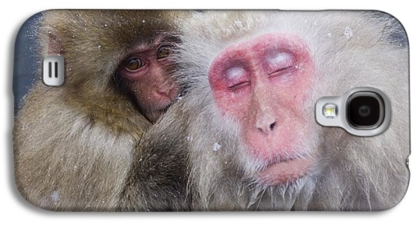 Sit-ins Galaxy S4 Cases - Older Snow Monkey Being Groomed By A Galaxy S4 Case by Natural Selection Anita Weiner