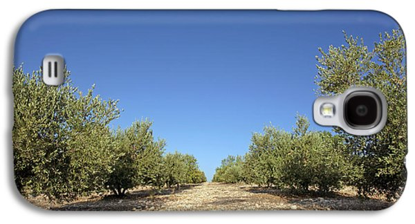 Olive Grove Galaxy S4 Case by Carlos Dominguez