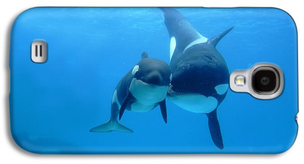 Youth Galaxy S4 Cases - Orca Orcinus Orca Mother And Newborn Galaxy S4 Case by Hiroya Minakuchi