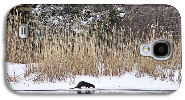 Otter In Winter Galaxy S4 Case by Mark Duffy