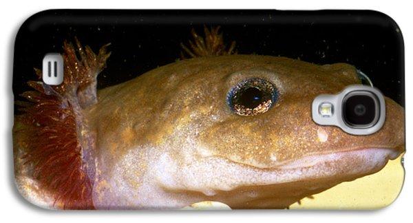 Pacific Giant Salamander Larva Galaxy S4 Case by Dante Fenolio