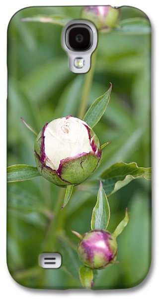 Paeonia Lactiflora 'shirley Temple' Galaxy S4 Case by Jon Stokes