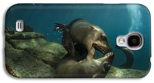 California Sea Lions Galaxy S4 Cases - Pair Of Playful Sea Lions, La Paz Galaxy S4 Case by Todd Winner