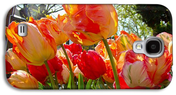 Phillie Galaxy S4 Cases - Parrot Tulips in Philadelphia Galaxy S4 Case by Mother Nature