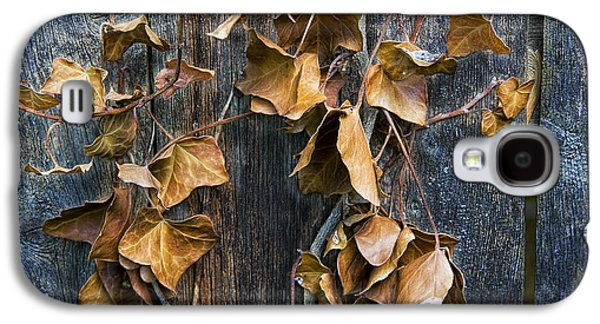 Vine Leaves Galaxy S4 Cases - Photograph of some dead leaves and vines hanging on a wooden fence Galaxy S4 Case by Randall Nyhof