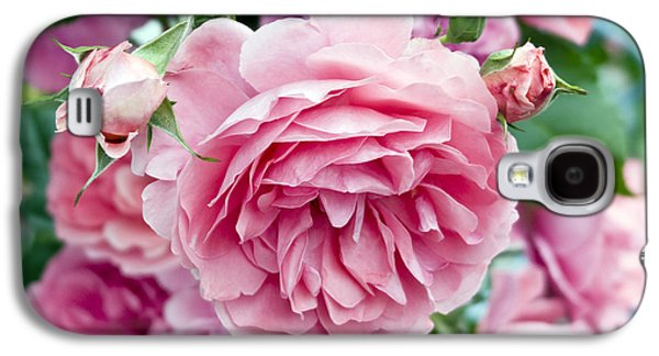 Garden Images Galaxy S4 Cases - Pink Roses Galaxy S4 Case by Frank Tschakert