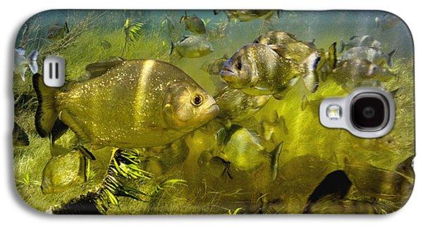Piranha Galaxy S4 Cases - Piranhas Galaxy S4 Case by Peter Scoones