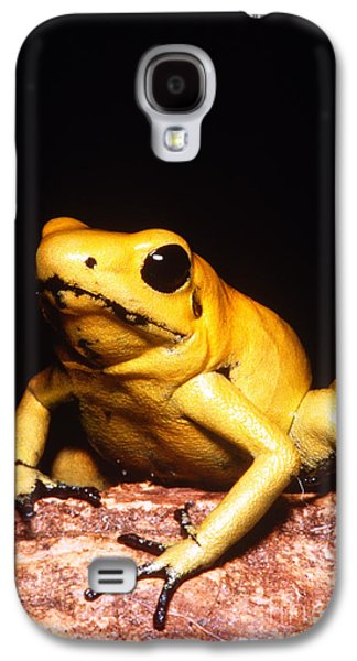 Frogs Photographs Galaxy S4 Cases - Poison Dart Frog Galaxy S4 Case by Dante Fenolio