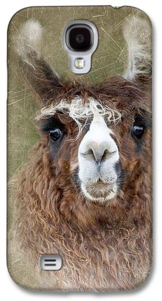 Llama Digital Galaxy S4 Cases - Portrait of a Llama Galaxy S4 Case by Betty LaRue
