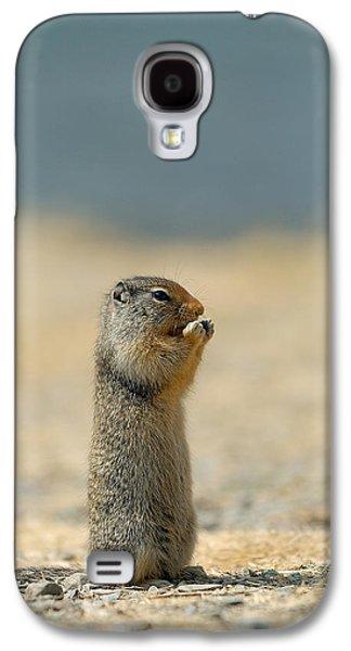 Prairie Galaxy S4 Cases - Prairie Dog Galaxy S4 Case by Sebastian Musial