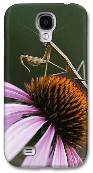 Indiana Flowers Galaxy S4 Cases - Praying Mantis and Coneflower - D008024 Galaxy S4 Case by Daniel Dempster