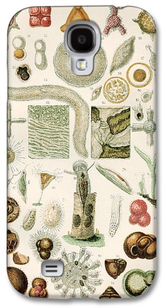 Micro-organisms Galaxy S4 Cases - Protozoan Microscopy, 19th Century Galaxy S4 Case by