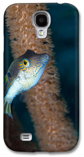Porcupine Fish Galaxy S4 Cases - Puffer Profile Galaxy S4 Case by Jean Noren