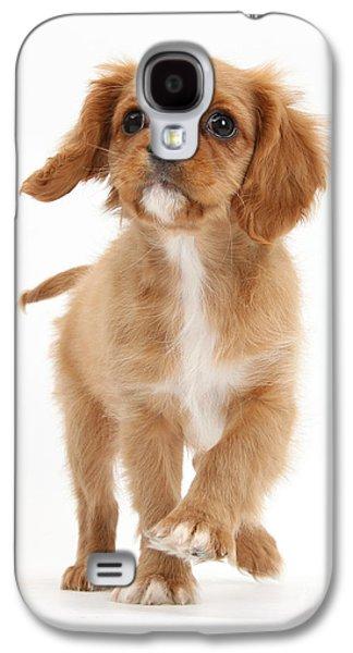 Dog Trots Galaxy S4 Cases - Puppy Trotting Foward Galaxy S4 Case by Mark Taylor