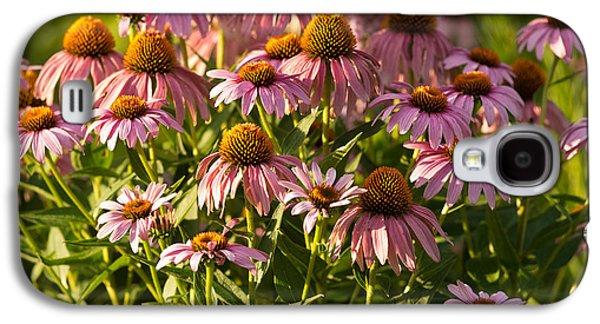 Prairie Galaxy S4 Cases - Purple Coneflower Galaxy S4 Case by Steve Gadomski