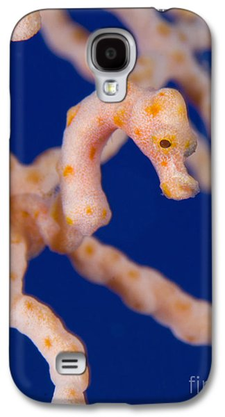 New Britain Galaxy S4 Cases - Pygmy Seahorse On Sea Fan, Papua New Galaxy S4 Case by Steve Jones