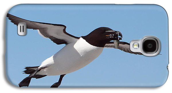 Razorbill In Flight Galaxy S4 Case by Bruce J Robinson