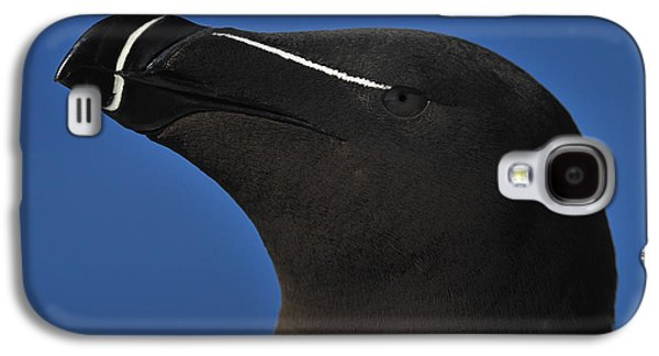 Razorbill Portrait Galaxy S4 Case by Tony Beck