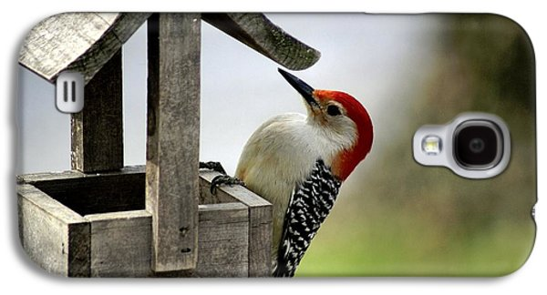 Larry Bird Galaxy S4 Cases - Red Bellied Woodpecker Galaxy S4 Case by L Granville Laird