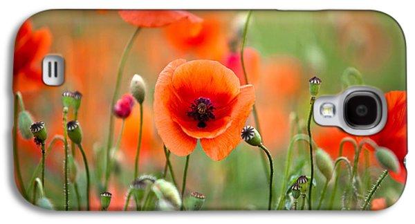 Botanical Galaxy S4 Cases - Red Corn Poppy Flowers 05 Galaxy S4 Case by Nailia Schwarz